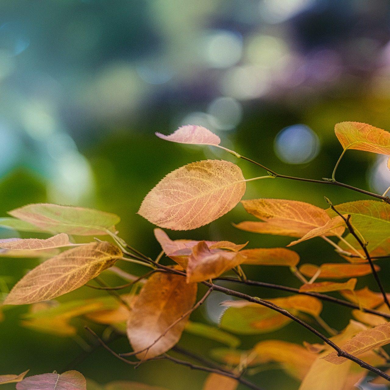 leaves-3768667_1920