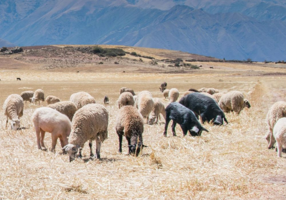 Annorlunda - svart får bland vita